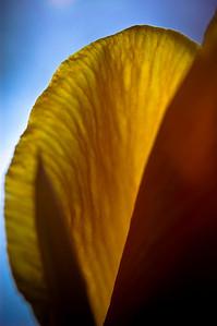 orange blade-8914