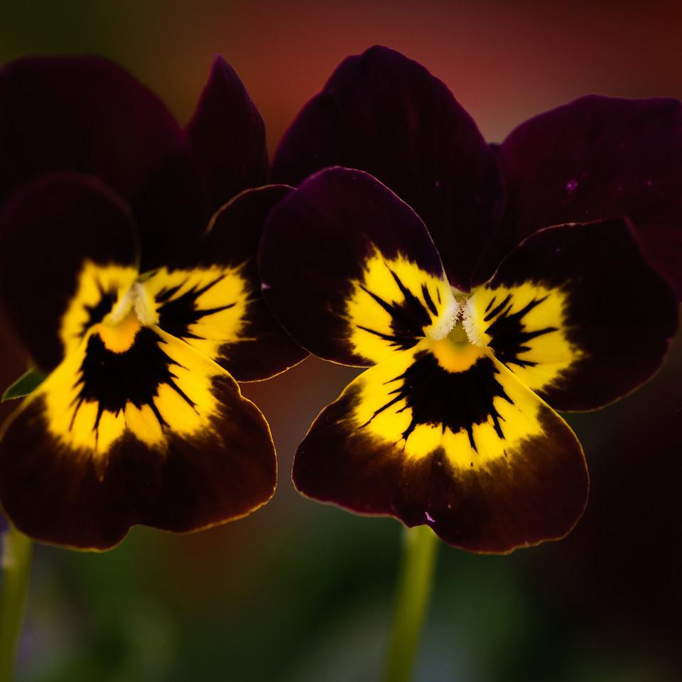 flowers-5484