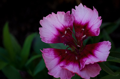 Flower-5489