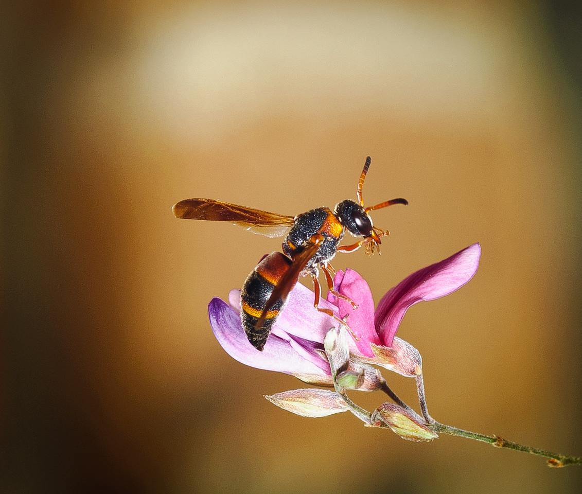 Bee-3045