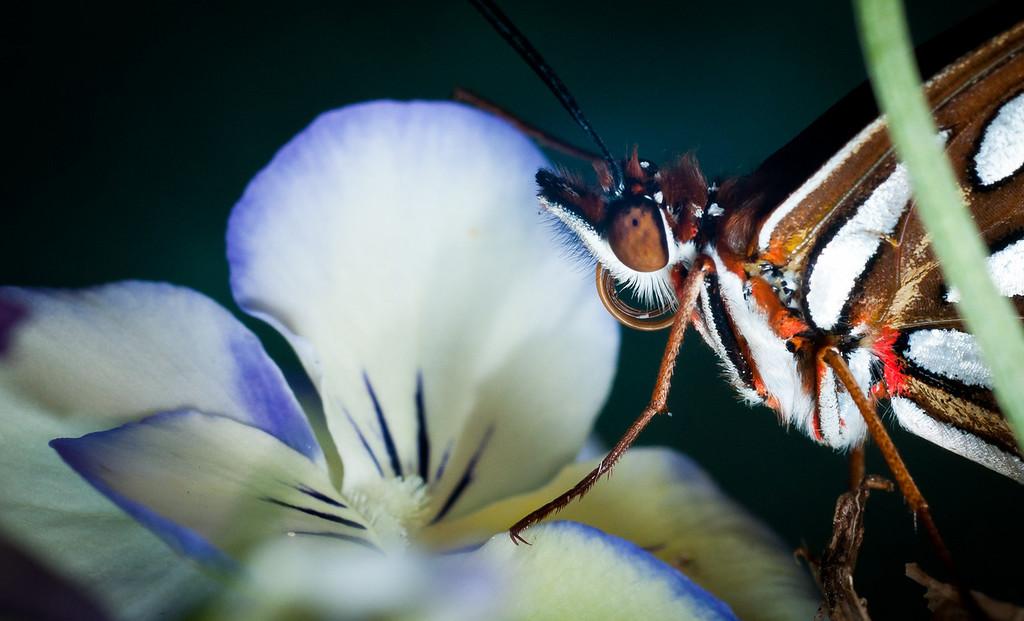 Butterfly-2759