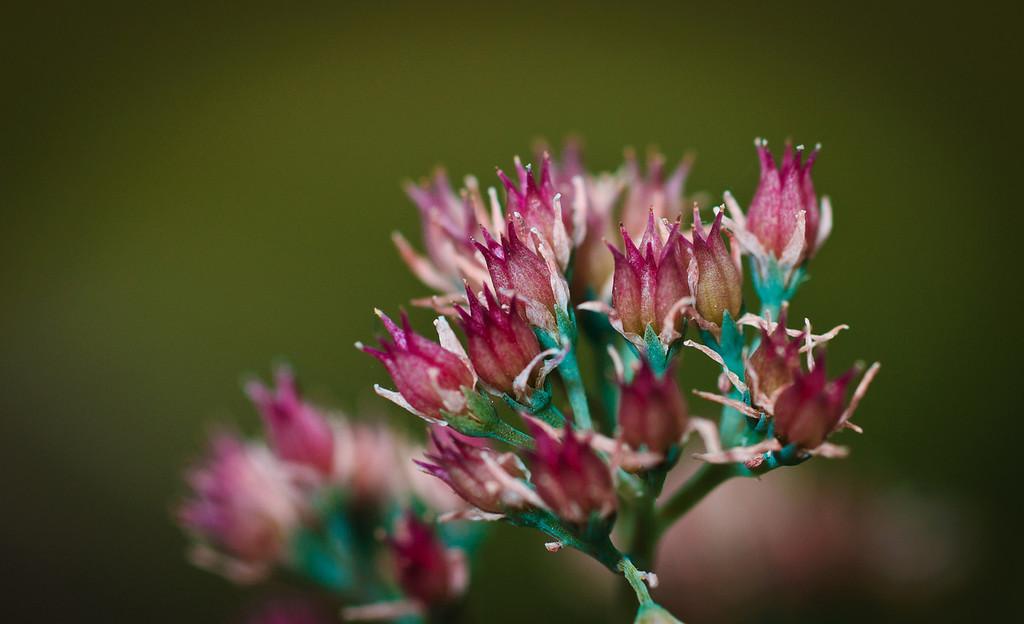 Tiny Flowers-3062