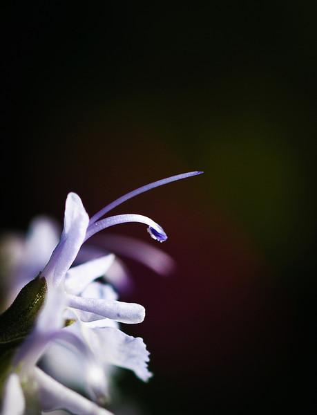tiny flower-2442