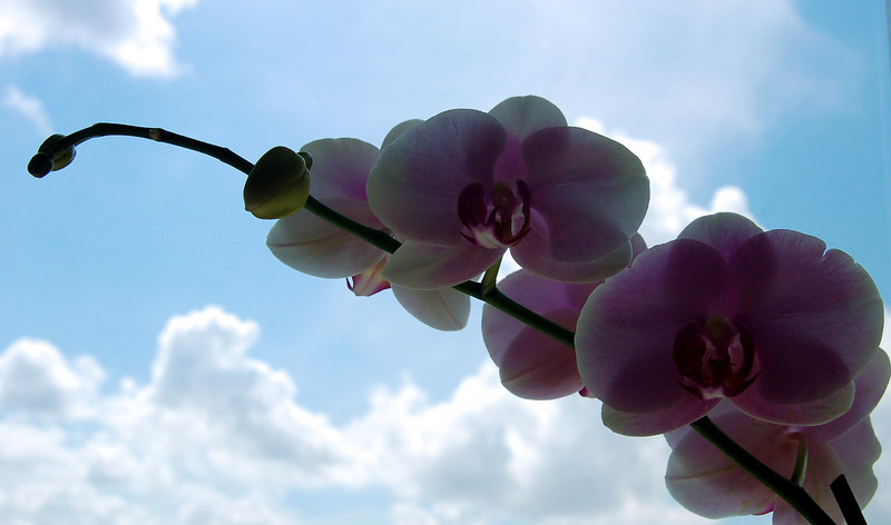 orchid and clouds