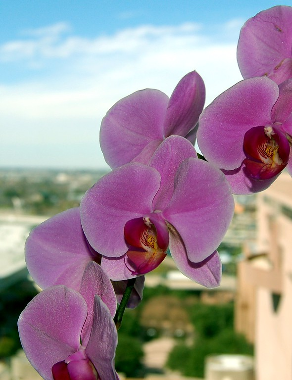 flowers over the city