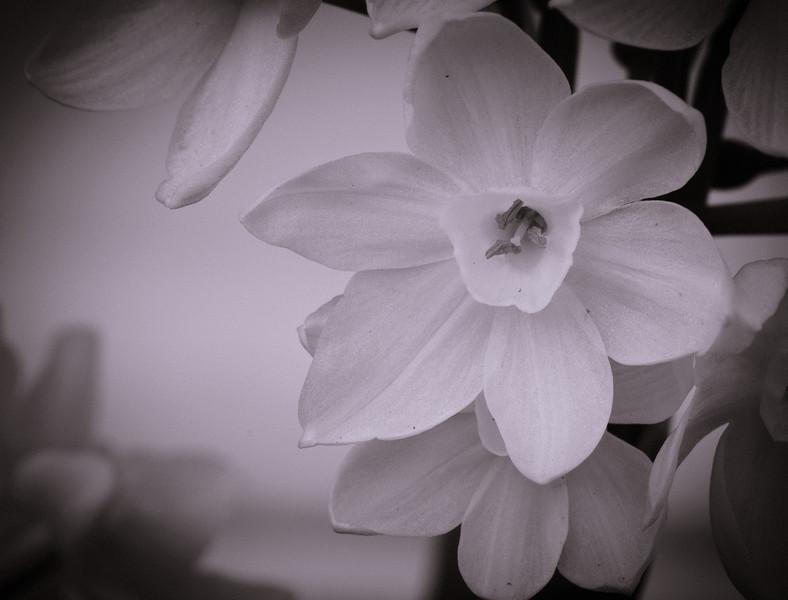 white flower-7615