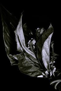 bouquet-4699