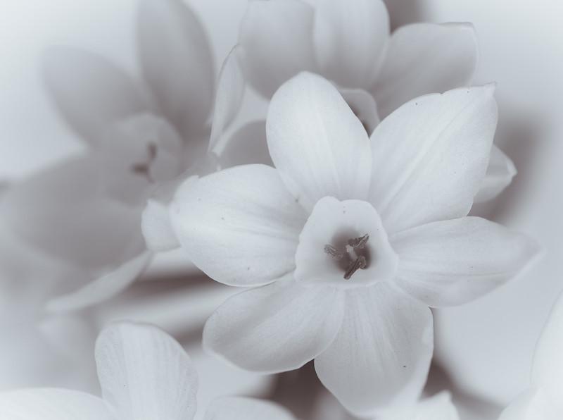 white flower-7620