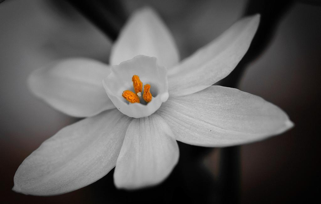 white flower-7621