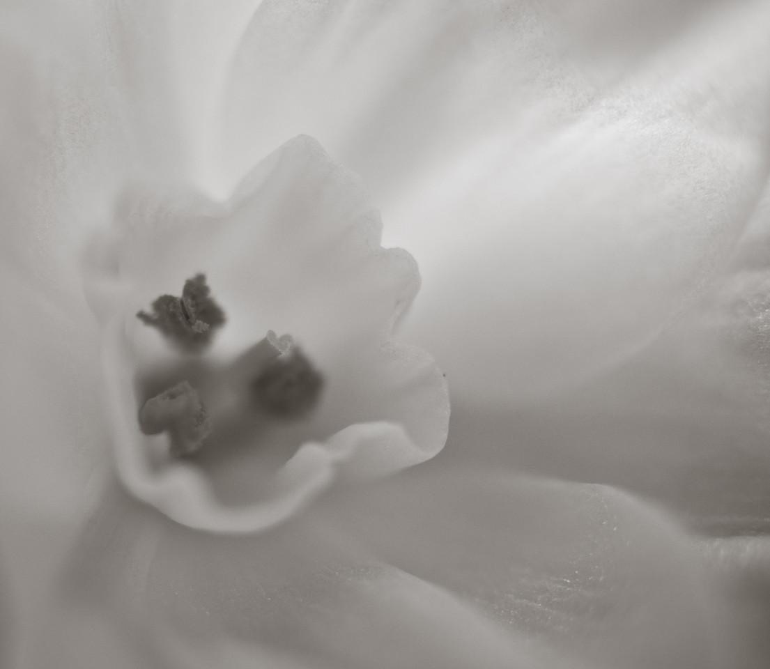 Paperwhites-4753