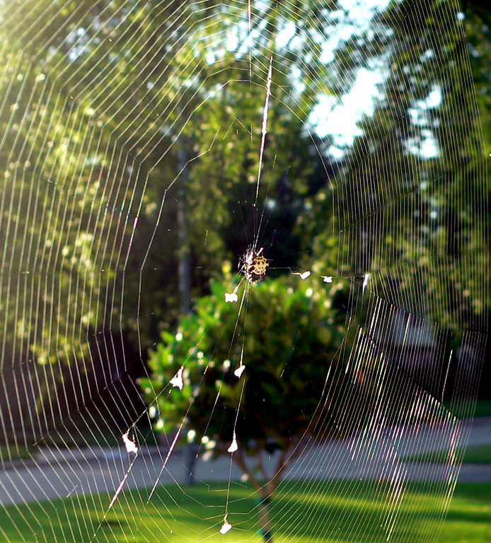 spider in the morning