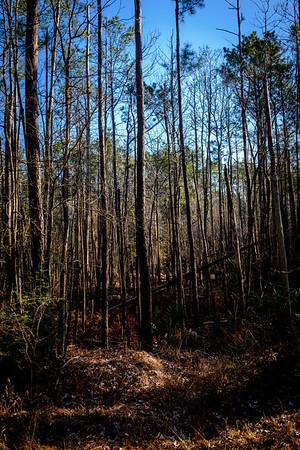 Trees-6632