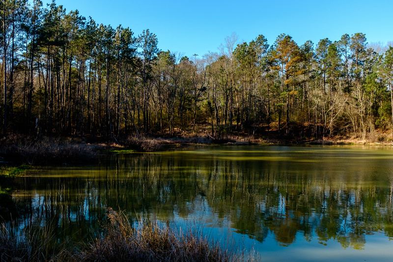 Trees by the pond-6634
