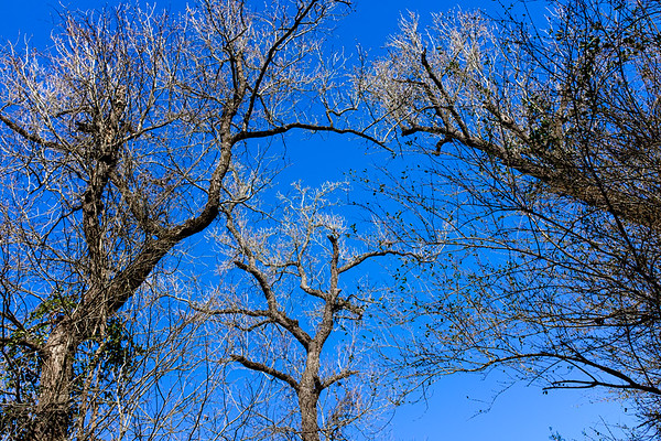 No leaves-6643