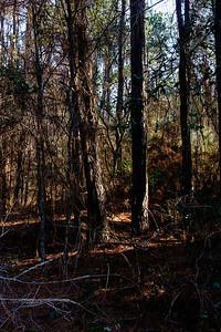 Trees-6622