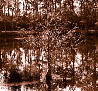 Tree in the lake-2693