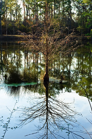 Tree in the lake-2692