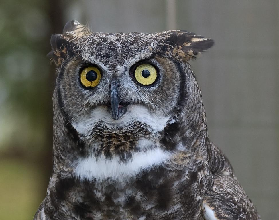 Owl-0028