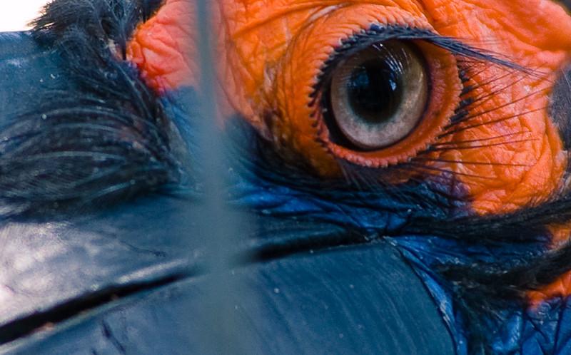 eye-0038