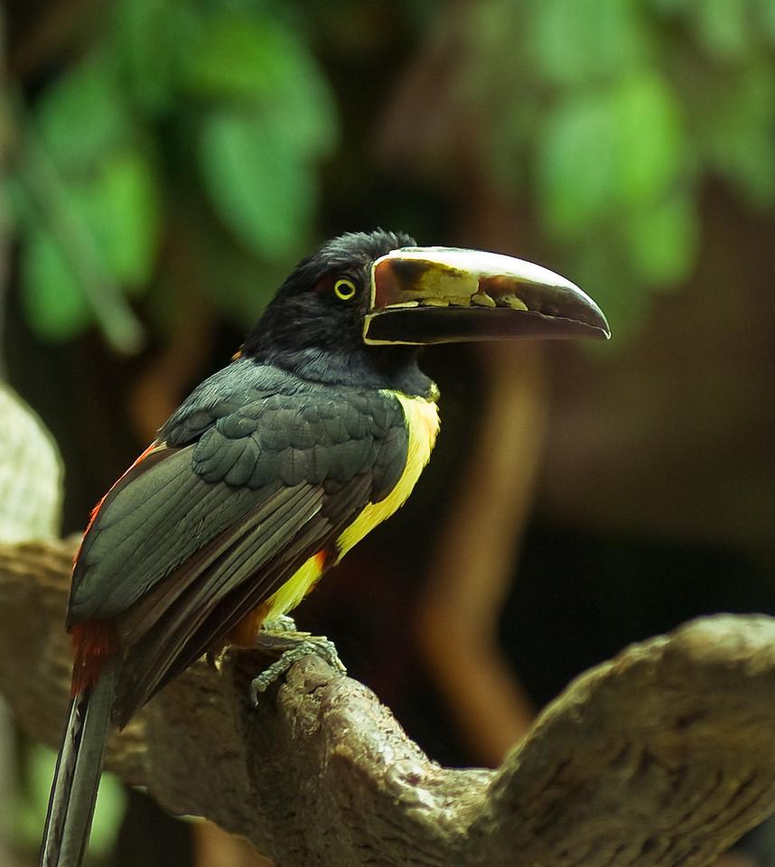 zoo-0081