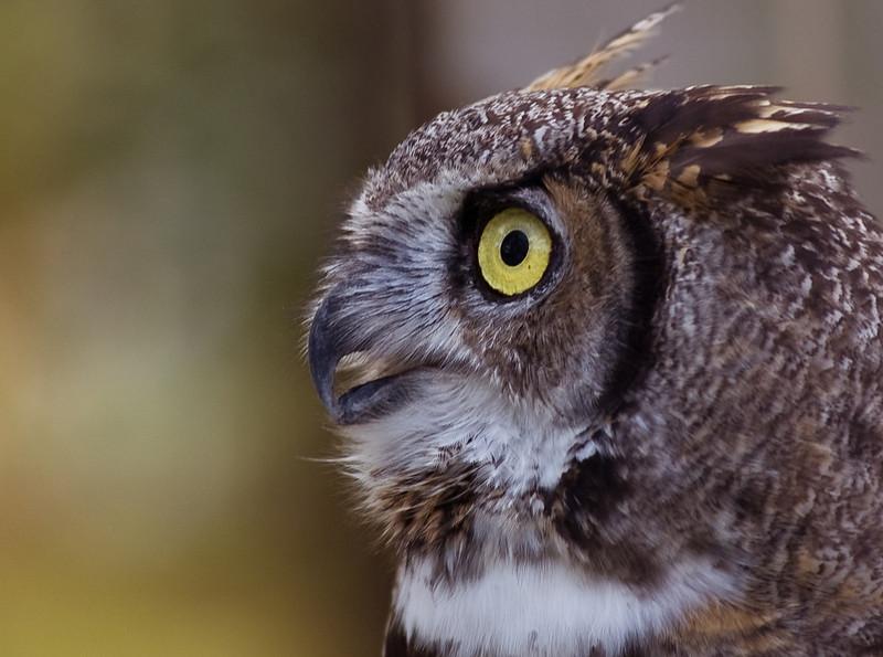 Owl-0029