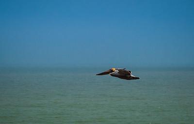 Galveston 21520-1595