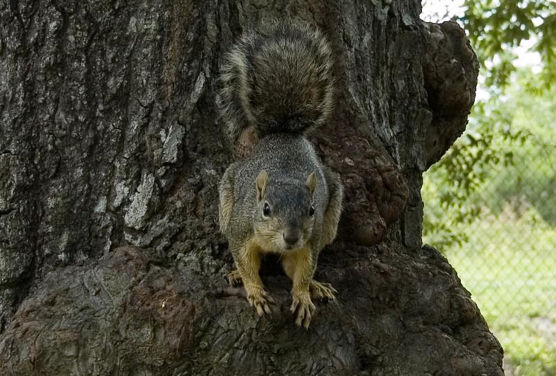 Squirrel poses-3