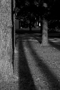 tree shadows-8045