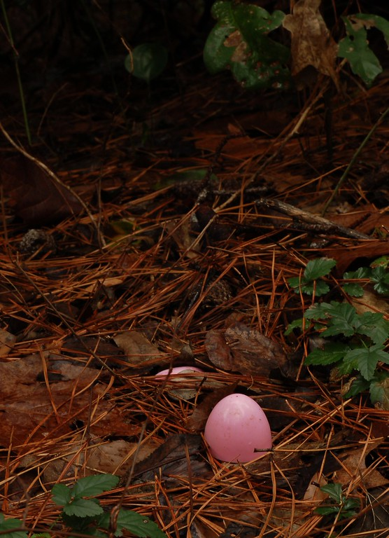 One pink egg