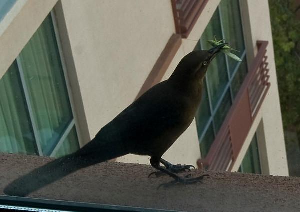 hungry bird-9419