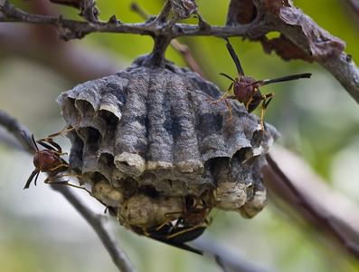 wasp nest-46