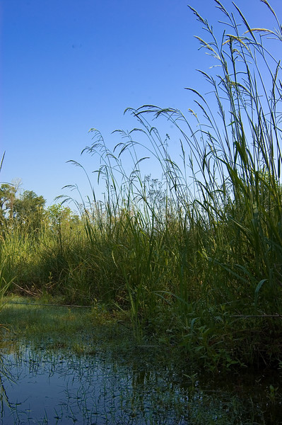 morning in the reeds