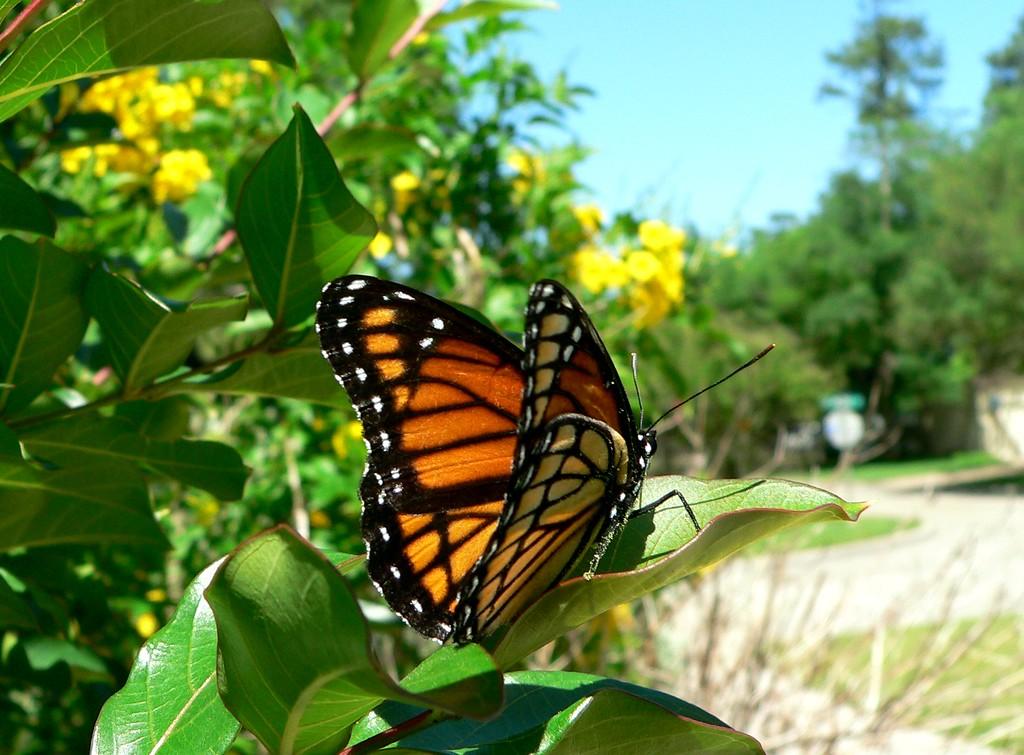 monarch takeoff