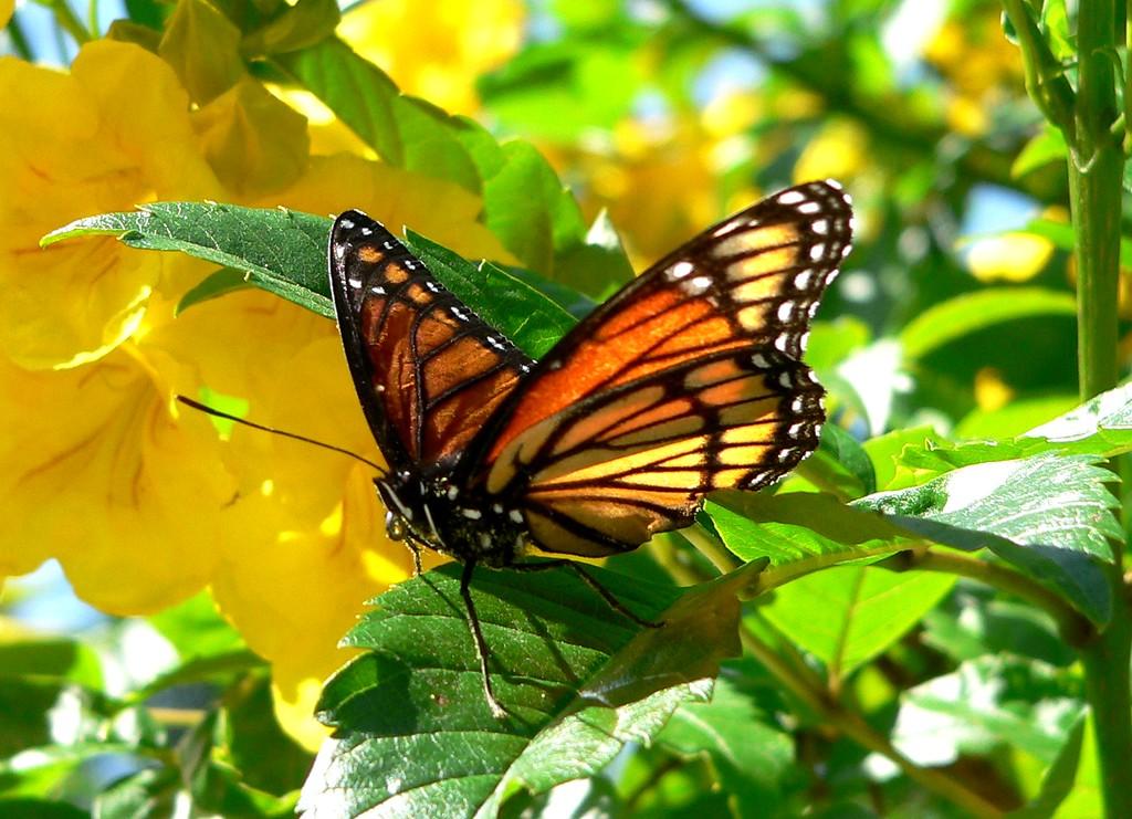 monarch lands