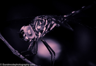 Dragonfly-0673-3