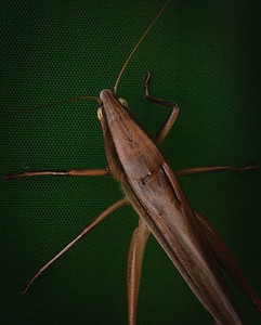 grasshopper-5482