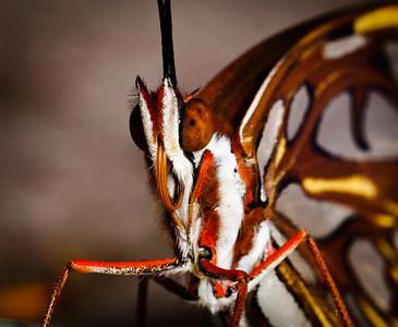 Butterfly-2724