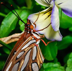 Butterfly-2751
