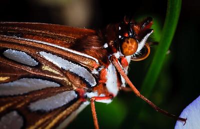 Butterfly-2786