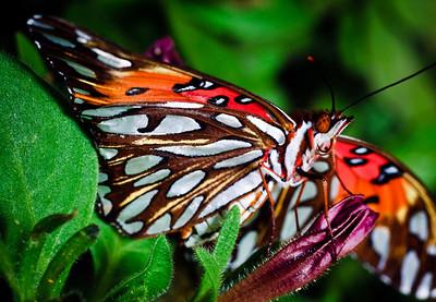 Butterfly-2743