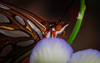 Butterfly-2785