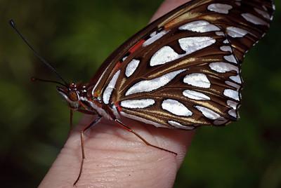 Butterfly-2735
