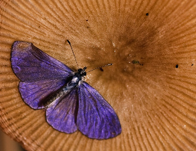Purple Moths-2607
