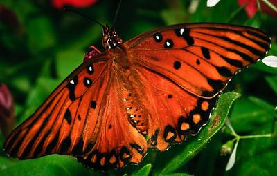 Butterfly-2741