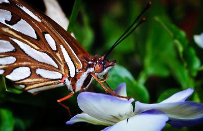 Butterfly-2760