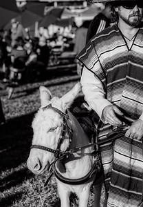 Festival Eastwood-