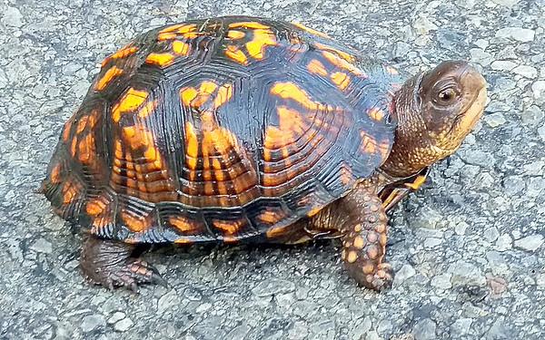 It's Turtle Season