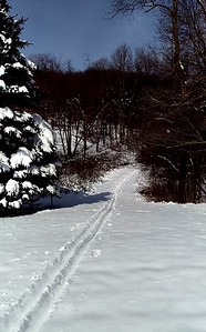 Cross-country Skiing at Blue Spruce Park