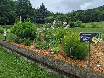 Polinator Friendly Garden