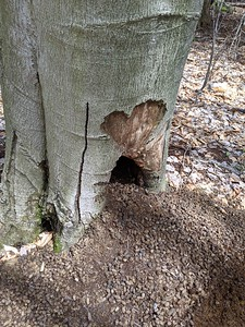 Porcupine Love Nest